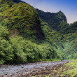 Stock Photo: Tahiti.Tropical nature and mountain river.