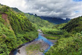 Tahiti.Tropical nature and mountain river — Stock Photo