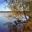 Autumn wood is reflected in the lake — Foto de Stock