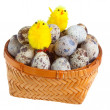 Wattled basket with quail eggs and a toy chicken — Stock Photo