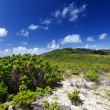 Mauritius, landscape of the island — Stock Photo