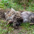 The cat sleeps on a grass — Stock Photo