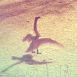 Vintage portrait of a white swan on ice — Stock Photo