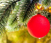 Red New Year's ball on a branch of a Christmas tre — ストック写真