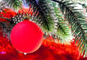 Red New Year's ball on a branch of a Christmas tre — Foto de Stock