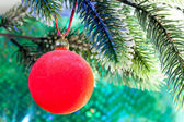 Red New Year's ball on a branch of a Christmas tre — 图库照片