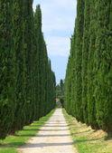 Avenue of cypresses. Italy. Tivoli. — Stock Photo
