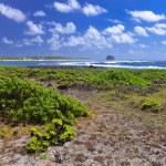Mauritius. Stony landscape of the island — Stock Photo