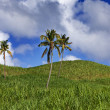 Palm trees on green hills and the blue sky with clouds — Stock Photo #38781899