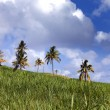 Palm trees on green hills and the blue sky with clouds — Stock Photo
