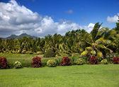 Nature of Mauritius. — Stock Photo