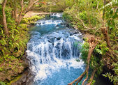 The small river with thresholds in the tropical nature. Mauritius — Stock Photo