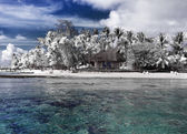 The island with palm trees to the sea, an infrared photo — Stock Photo