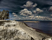 Pine over the sandy coast , an infrared photo — Stock Photo