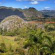 Cuba. Tropical nature of Vinales Valley. — Stock Photo #41536551