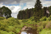 The river in the pine wood — Stockfoto