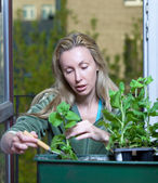 The young woman and box with petunia flowers seedling — Stock Photo