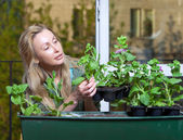 The young woman on a balcony lands petunia seedling — Stockfoto