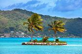 пальмовые деревья на тропический остров в океане — Стоковое фото