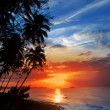 Palm trees silhouette and a sunset over the sea — Stock Photo #49421621