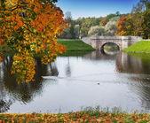 Russia,Gatchina, bright autumn tree in park — Stock Photo