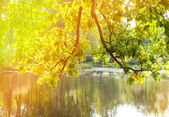 The bright autumn wood is reflected in the lake — Stock Photo