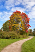 Bright autumn tree in park — Stock Photo