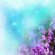Flowers on abstract background — Stock Photo #7901094