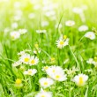 Spring background — Stock Photo #25197675