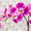 Violet orchid flower — Stock Photo