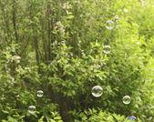 Bubble blower — Fotografia Stock