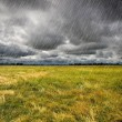 Heavy Rain over a prairie in Brittany, France — Stock Photo