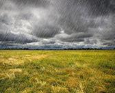Pioggia sopra una prateria in bretagna, francia — Foto Stock