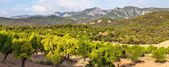 Almond trees with Ports de Besseit Mountains in the background — Stock Photo