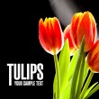 Red tulips no the black background — Stock Photo #41574613