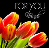 Red tulips on the black background — Stock Photo