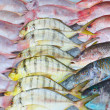 Fresh fish — Stock Photo #17851713