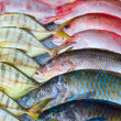 Fresh fish — Stock Photo #17851717