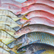 Fresh fish — Stock Photo #17851719