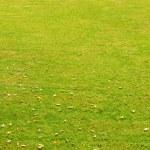Green grass — Stock Photo #2590276
