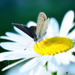 Stock Photo: Beauty butterfly