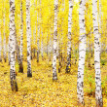 Autumn forest — Stock Photo #32756401