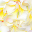 Frangipani — Stock Photo #39584779