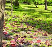 Parque tropical — Foto de Stock