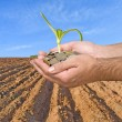 Hands with seedling - Stock Photo