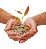 Palmas con un árbol growng de pila de monedas — Foto de Stock