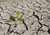 Sapling growing from arid land — Stock Photo