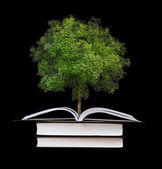 Tree growing from book — 图库照片