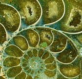 Ammonite fossil — Stock Photo
