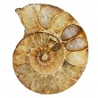 Ammonite fossil — Stock Photo #12864733